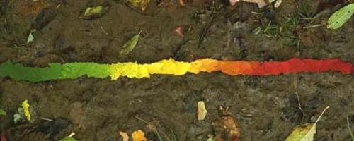 goldsworthy_leaves