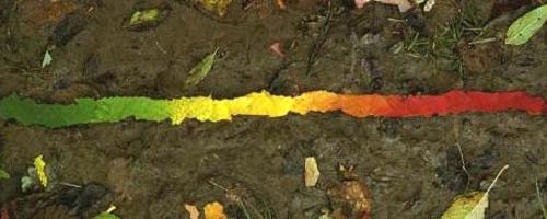 goldsworthy_leaves